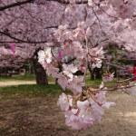 Photo_19-04-28-19-46-14.323