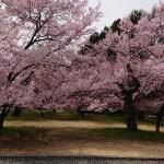 Photo_19-04-28-19-46-16.607