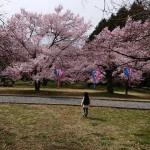 Photo_19-04-28-19-46-20.246